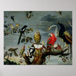 Concierto de pájaros póster