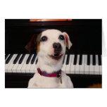 Concierto del piano de Jack Russell Terrier Felicitaciones