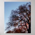 Conclusión del otoño impresiones