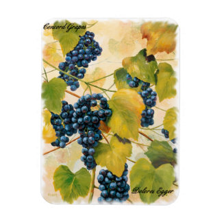 Concord Grapes on the Vine Magnet