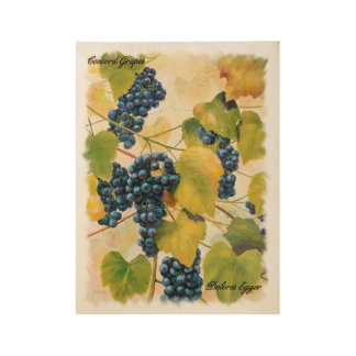 Concord Grapes on the Vine Wood Poster