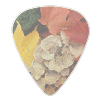 Concord, NH. Maple leaves and bracket fungus Acetal Guitar Pick