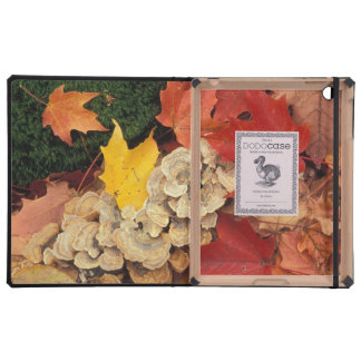 Concord, NH. Maple leaves and bracket fungus Covers For iPad