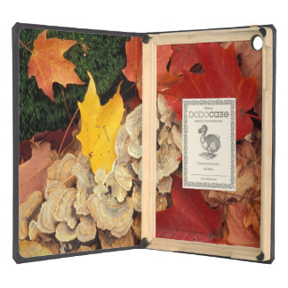 Concord, NH. Maple leaves and bracket fungus iPad Air Cover