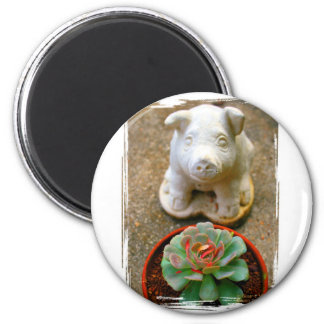 Concrete Sitting Pig with succulent plant Refrigerator Magnets