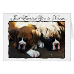 Condolences Boxer puppies greeting card