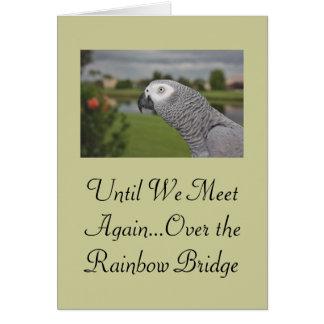 Condolencia del mascota del loro del gris africano tarjeta de felicitación
