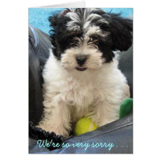 Condolencia del mascota - perrito de Havanese. Tarjeta De Felicitación