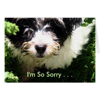 Condolencia del mascota - perrito de Havanese Tarjeta De Felicitación