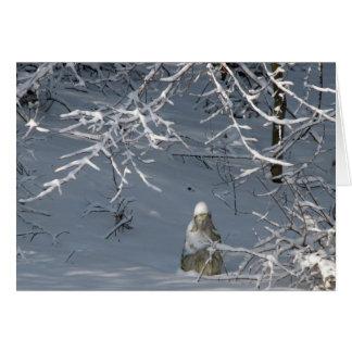 Condolencia - invierno Madonna Felicitacion