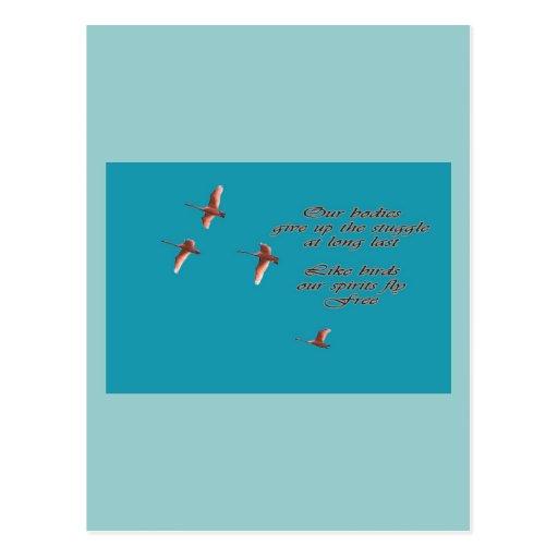 Condolencia-Mayo usted encuentra los cisnes de Tru Tarjetas Postales