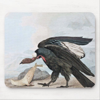 Condor Bird and Seal Vintage Art Mouse Pad