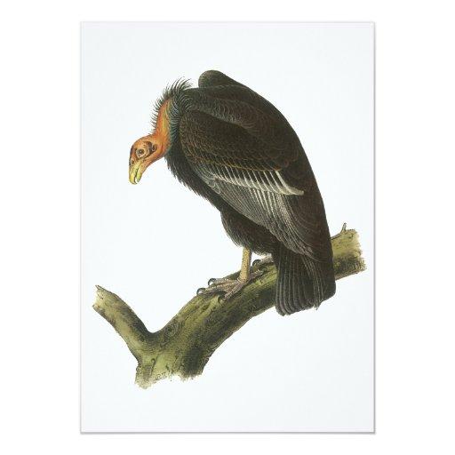 """Cóndor de California, Juan Audubon Invitación 5"""" X 7"""""""