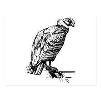Condor Post Cards