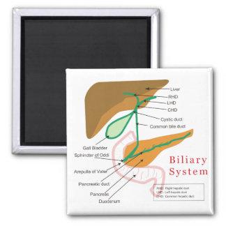 Conducto biliar biliar de la carta del diagrama de imán cuadrado