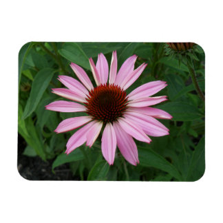 Cone Flower and Green Magnet