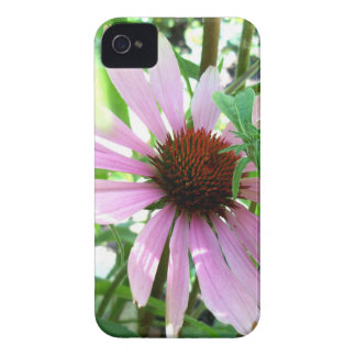 Cone Flower Hiding iPhone 4 Cover