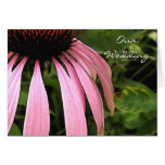 Cone Flower Invitation Greeting Cards