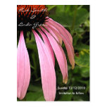Cone Flower- Save the Date Postcard