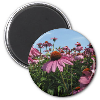 Cone Flowers Magnet
