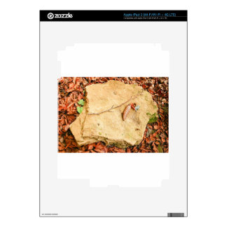 CONE ON STONE AMONG LEAVES SKINS FOR iPad 3