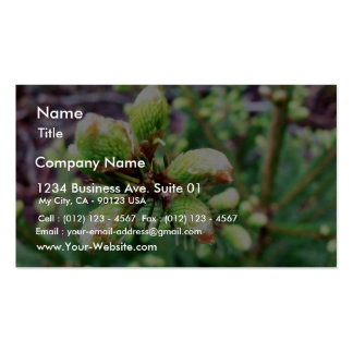 Cone Sprouts Business Card