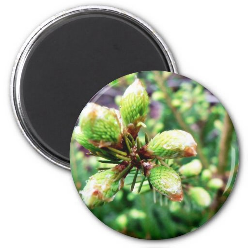 Cone Sprouts Refrigerator Magnets