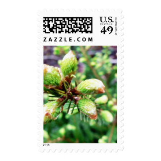 Cone Sprouts Stamp
