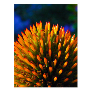 coneflower1 post cards