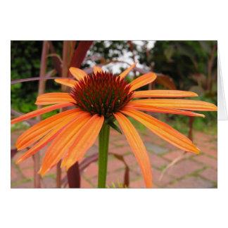 Coneflower anaranjado - modificado para requisitos tarjeta de felicitación