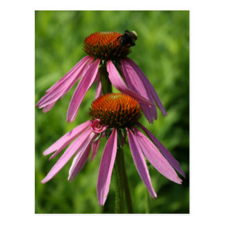 Coneflower and Bee Postcard