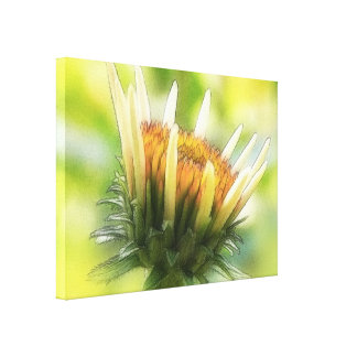 Coneflower Bud Stretched Canvas Print