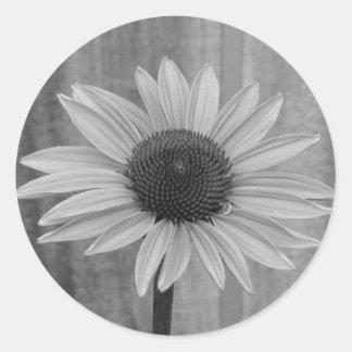 Coneflower Classic Round Sticker