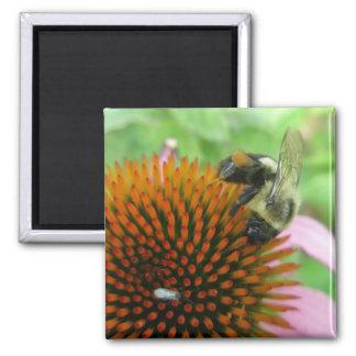 Coneflower & Eastern Carpenter Bee Items Magnet