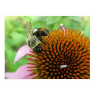 Coneflower & Eastern Carpenter Bee Items Postcard
