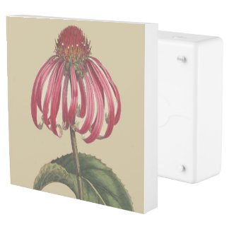 Coneflower Flowers Floral Inlet Outlet Cover