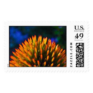 coneflower landscape stamp