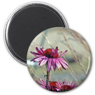 Coneflower Magnet