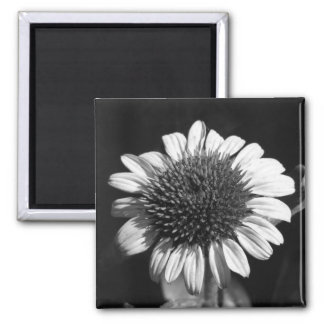 Coneflower Magnets