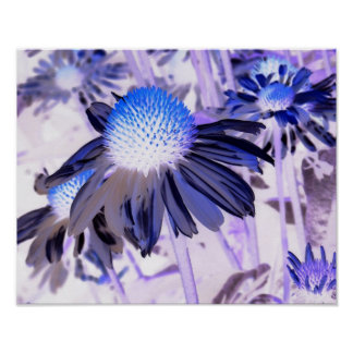 coneflower negative poster