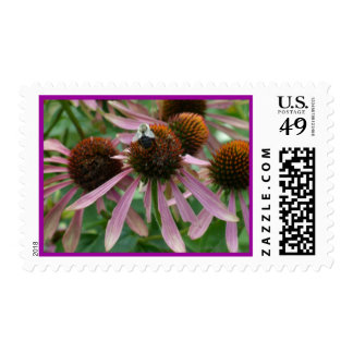 Coneflower Pink Bee Postage Stamps