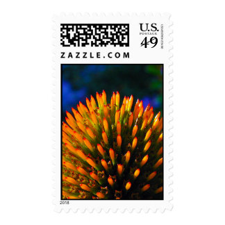 coneflower postage stamp