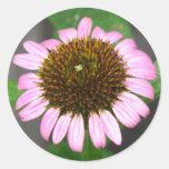 Coneflower púrpura pegatina redonda