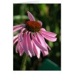Coneflower púrpura tarjetas