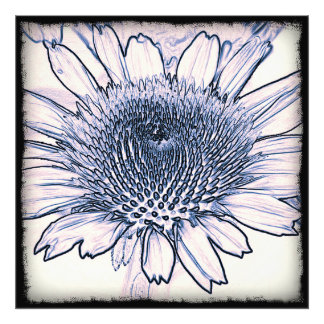 Coneflower Sketch Photographic Print