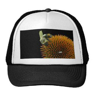 Coneflower y artículos del este de la abeja de car gorros