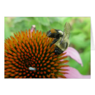 Coneflower y artículos del este de la abeja de car tarjeta pequeña