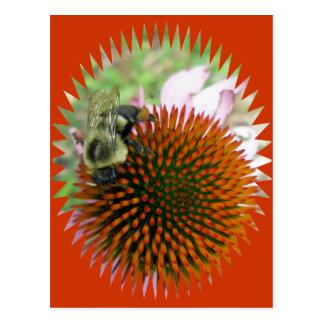 Coneflower y artículos del este de la abeja de car tarjetas postales