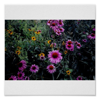 Coneflowers & Black-Eyed Susans_1a Poster
