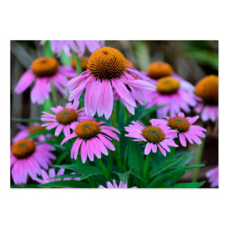 Coneflowers Large Business Cards (Pack Of 100)